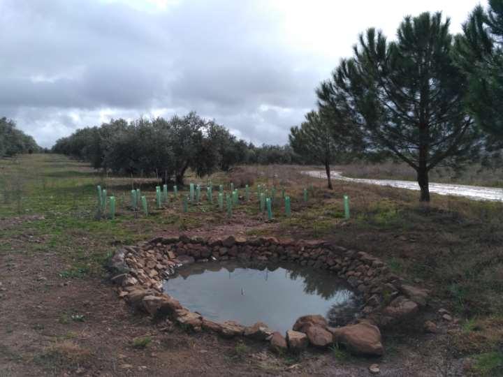 Creación de dos charcas en Castellar de Santiago (Ciudad Real)