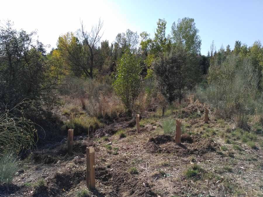 Ampliación del Bosque Alphabet, ¡sigue creciendo cada año en árboles y en extensión!