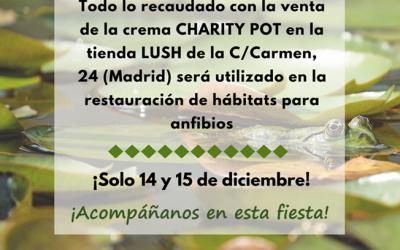 Ven a la Charity Party de Lush y Ecoherencia en Madrid y colabora con nosotros