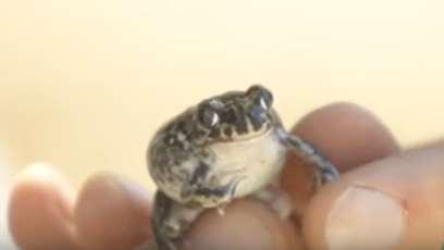Especies de Anfibios – Segunda entrega del proyecto de Creación de charcas para anfibios