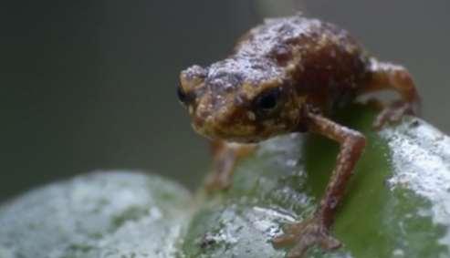 Creación de charcas para anfibios: la Custodia del Territorio