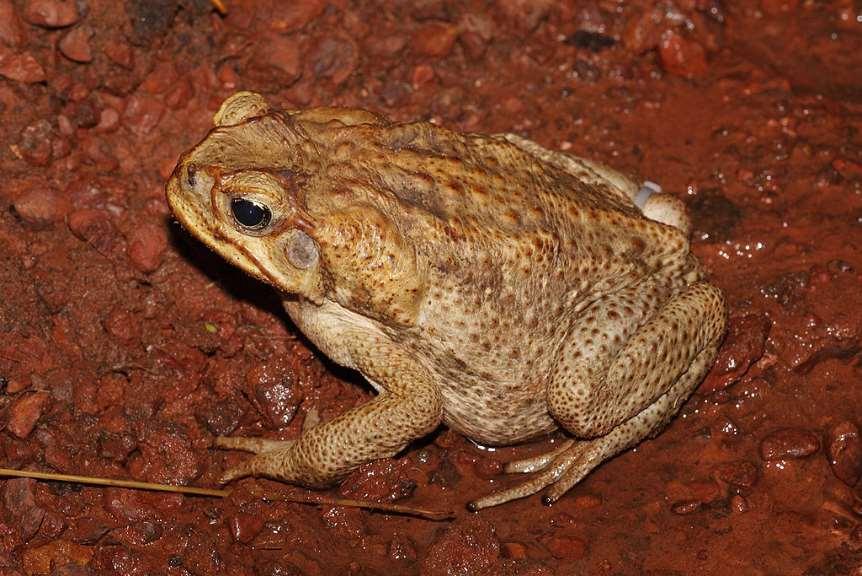 Custodia del Territorio – Tercera entrega del proyecto de Creación de charcas para anfibios
