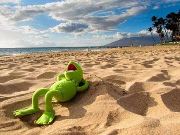 Vacaciones de anfibios – Quinta entrega del proyecto de Creación de charcas para anfibios