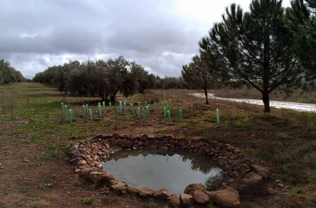 Creación de charcas para anfibios: construcción de charcas para anfibios