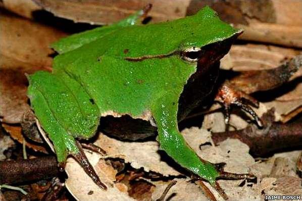 Creación de charcas para anfibios: plantaciones en las charcas