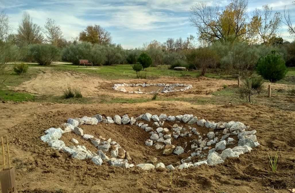 Restauración de Ecosistemas y participación ciudadana: construcción de dos charcas para anfibios en Las Rozas de Madrid