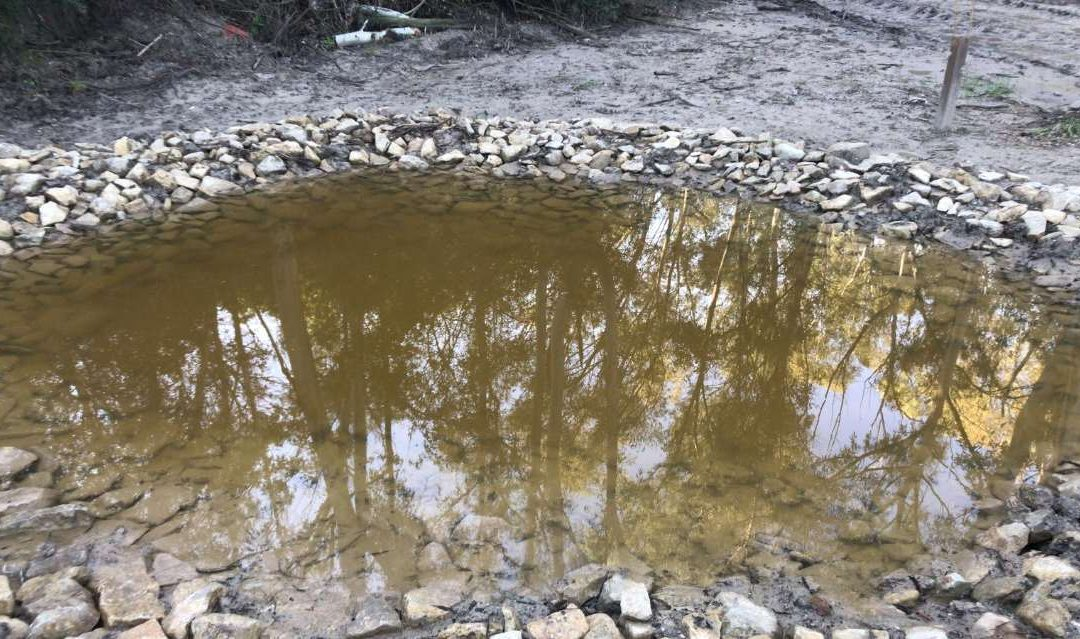 Restauración de Ecosistemas y participación ciudadana: construcción de dos charcas para anfibios en Jerez de la Frontera
