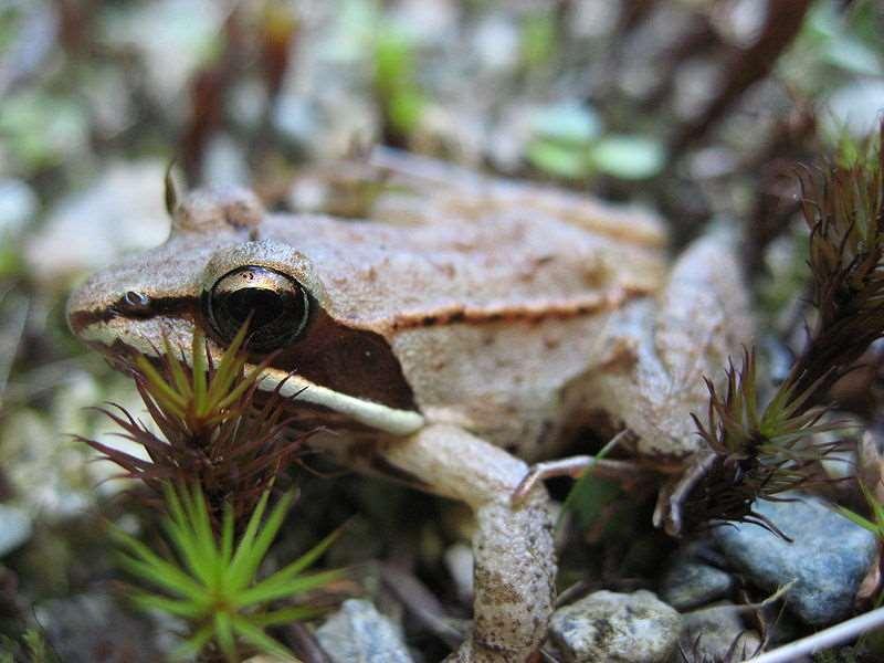 Creación de charcas para anfibios: mantenimiento y seguimiento