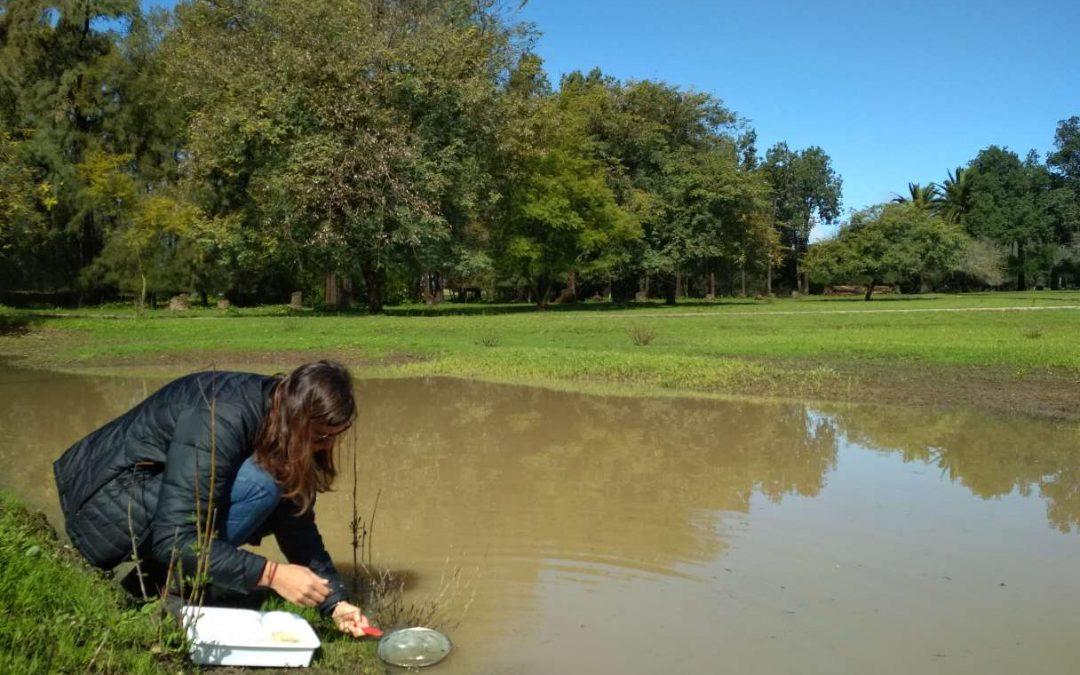 Mantenimiento y seguimiento de las charcas para anfibios