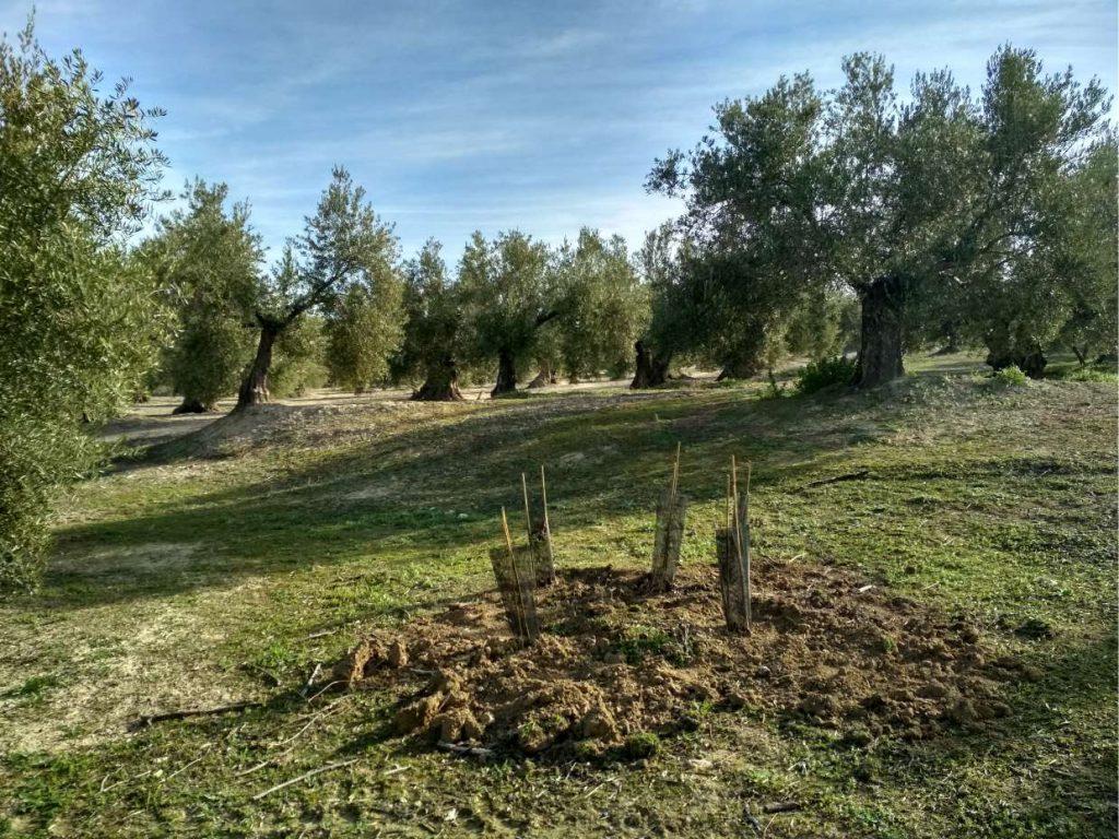 Ecoherencia construye dos charcas para anfibios y plantado 120 árboles en Mancha Real (Jaén)
