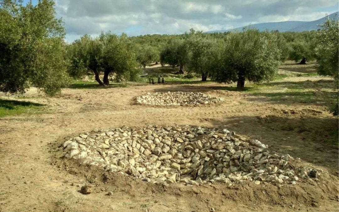 Ecoherencia construye dos charcas para anfibios y planta 120 árboles en Mancha Real (Jaén)
