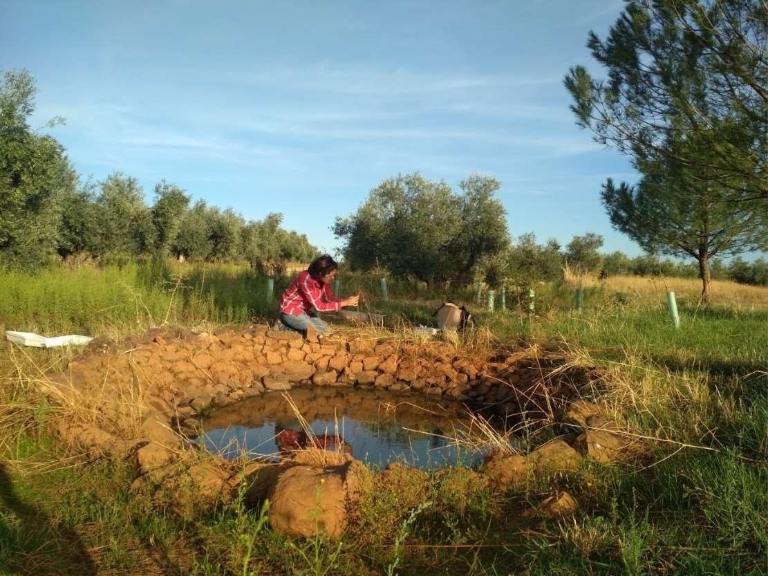 Ecoherencia impulsa la biodiversidad en un olivar en producción del Campo de Montiel