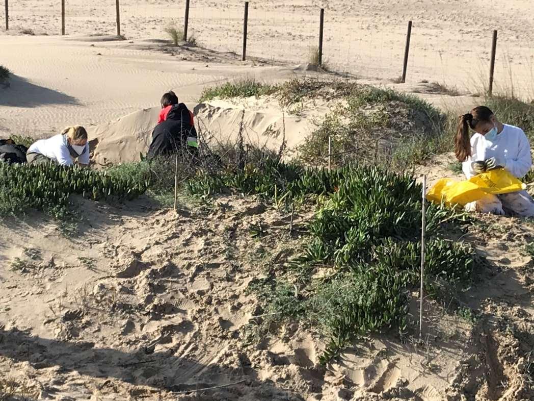 Voluntarios en las tareas de eliminación de la planta invasora
